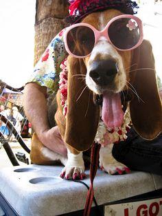 Street performer dog, Key West