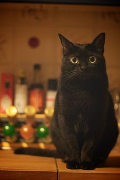 "* * BLACK CAT: "" At de end of de day, all weez haz iz de peoples who cares about us. So basically; I haz nuthin'."""