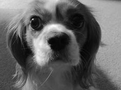 """Chloe` """"Dog"""""""
