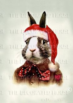Beau Bunny Rabbit Christmas Portrait in Santa Hat. The Decorated House on Etsy.