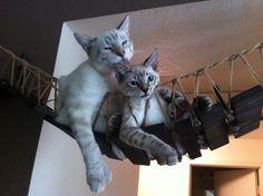 Cat bridge.. indiana jones cat bridge by CatastrophiCreations