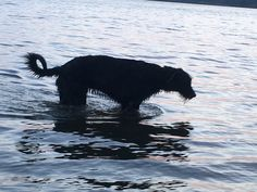 Baloo,rybník Dvořiště