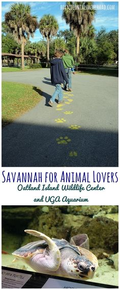 Two great destinations in the Savannah area for animal lovers: the Oatland Island Wildlife Center and the UGA Marine Education Center and Aquarium
