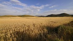 Kornfeld Korn, Felder, Vineyard, Environment, Fairy, Clouds, Mountains, Landscape, Nature