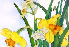 Suzanne Hull Wilson Floral    WATERCOLOR