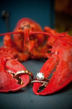 ring shot idea (lobster) - New England Summer Wedding at Peaks Island by Kathy Blanchard Photography
