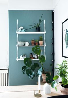 Teal wall and shelves. Nordic Home, Scandinavian Home, Scandinavian Interior, Decor Interior Design, Interior Decorating, Gravity Home, Apartment Goals, Teal Walls, First Home