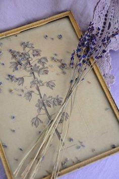 "syflove: ""lavender """