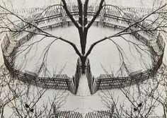 André KERTÉSZ :: A Winter Garden, New York, 1970