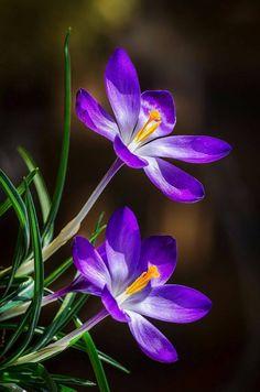 Pretty in purple!- Pretty in purple! Pretty in purple! - - Pretty in purple!- Pretty in purple! Pretty in purple! - – Pretty in - Rare Flowers, Flowers Nature, Exotic Flowers, Amazing Flowers, Pretty Flowers, Purple Flowers Wallpaper, Beautiful Flowers Wallpapers, Blossom Garden, Purple Garden