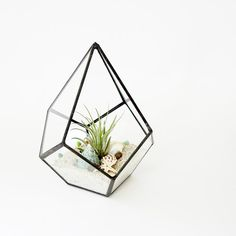 Geometric Terrarium Pod Air Plant Glass by JechoryGlassDesigns