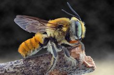 BEE by Yudy Sauw on 500px
