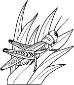 Grasshopper coloring page. Animal coloring pages. Coloring pages for kids. Thousands of free printable coloring pages for kids! Insect Coloring Pages, Online Coloring Pages, Animal Coloring Pages, Colouring Pages, Free Coloring, Adult Coloring, Coloring Books, Childrens Colouring Sheets, Coloring Sheets For Kids