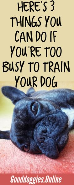 Check out these #dogtraining tips for the busy dog mom or dad on the go. #GoodDoggies