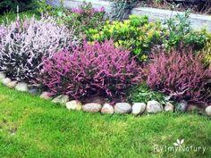 jak przycinać wrzosy Deck Enclosures, Yard, Landscape, Sidewalk Ideas, Plants, Rose Trees, Home, Pagan, Patio