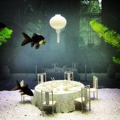 14 Diy Aquarium Ideas For Aquarists