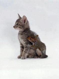 Cat + Squirrel ❤ #love #cat #animal