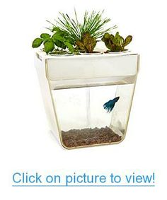 AquaFarm Aquarium & Organic Garden - This is a self-cleaning fish tank that uses the fish waste to naturally fertilize the plants above. In turn, the plants clean the water for your pet fish. You just have to feed the fish. Fish Garden, Water Garden, Herb Garden, Micro Garden, Herb Farm, Aquaponics System, Aquaponics Supplies, Hydroponic Systems, 3 Gallon Fish Tank
