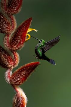 Stunning photo, amazing colors, photo by Yehudi Hernandez. - I feel Hummingbirds are one of the most wondrous things God has gifted this world!