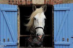 Percheron du chateau de Chateaudun en Eure-et-Loir Fat Horse, Horse Head, Percheron Horses, Chartres, Door Murals, Faux Painting, Draft Horses, Small Farm, Horseback Riding