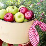 Biluțe de Ovăz și Nucă - Desert Simplu, Fără Foc și Zahăr | La Taifas Cancer, Apple, Fruit, Food, Apple Fruit, Essen, Meals, Yemek, Apples
