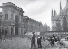 piazza Duomo - la mietitura del frumento - giugno 1943 - seconda guerra mondiale