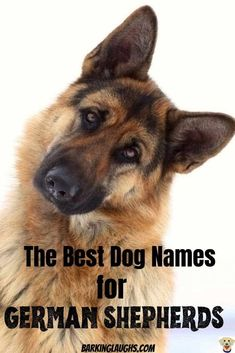 This GSD deserves the great dog name. Be sure to get it right with the best dog names list for German Shepherds. Female Dog Names List, Puppies Names Female, Dogs Names List, Funny Dog Names, Dog Names Male, Girl Dog Names, Puppy Names, Funny Dogs, Boy Dog Names Unique