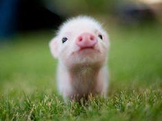 Small cutie
