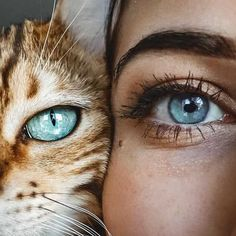 The eyes of the soul 👁 From 📩 Submit your cat photo photo to our contest to Notification O Pretty Eyes, Beautiful Eyes, Poses Photo, Aesthetic Eyes, Photo Chat, Cute Animal Photos, Eye Photography, Fashion Photography, Tier Fotos