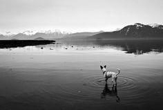 Pet portraiture photography portrait Alaska Magazine Dalmatian black and white scenic simple landscape seascape