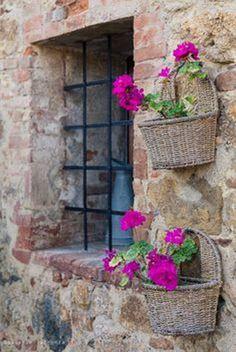 Pencere ve sardunyalar..