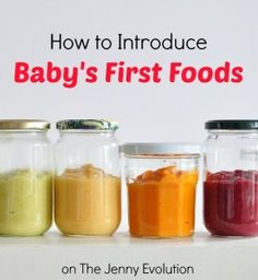How to Introduce Baby's First Foods   The Jenny Evolution