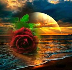 Rached Akkari added a new photo. Beautiful Love Pictures, Beautiful Sunset, Beautiful Roses, Sunrise Drawing, Paradis Tropical, Montreal Botanical Garden, Love Backgrounds, Beautiful Flower Arrangements, Jesus Pictures