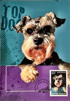 Top Dogs Miniature Schnauzer by Isaac Wang