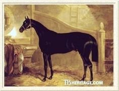 Faugh-a-Ballagh(1841)Sir Hercules- Guiccoli By Bob Booty. 4x4 To Bagot, 4x5 To Highflyer, 5x5x5 To Eclipse, 5x5x5x5x5 To Herod. Full Brother To Birdcatcher. Had Some Success As A Stallion.