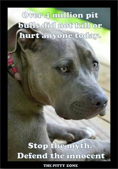 Over 4 million pit bulls did not kill or hurt anyone today