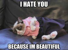 Grumpy cat on fashion. cute cats