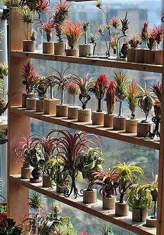 готовые варианты и решения использования воздушных растений (эпифитов) для оформления стен, офисов, ресторанов, баров и кафе