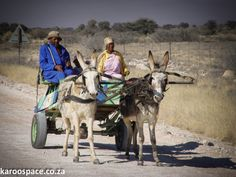 That Kalahari town of Hotazel gets hot, but not that hot. South Africa, Camel, Memories, Animals, Space, Hot, Memoirs, Floor Space, Animaux