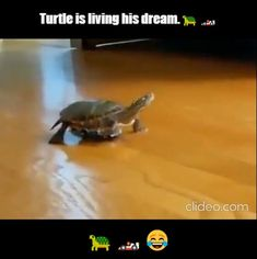Cute Animal Memes, Cute Animal Videos, Cute Funny Animals, Funny Animal Pictures, Funny Cute, Funny Vid, Hilarious, Cute Little Animals, Really Funny Memes