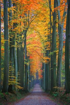 I would so do anything right now to walk down that and not worry about a thing in the world.....That is beautiful!!!