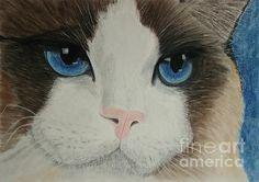 Gato ragdoll. Pastel sobre papel. Ragdoll cat. Pastel on paper.