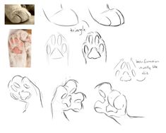 cat reference 33 Ideas Drawing Cat Poses Design Reference For 2019 Cat Paw Drawing, Furry Drawing, Drawing Base, Drawing Drawing, Figure Drawing, Drawing Techniques, Drawing Tips, Drawing Sketches, Cool Drawings