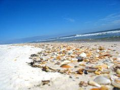 Beach littered with shells in St George Island State Park in Fla.