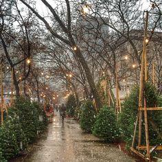 christmastrees.jpg (640×640)