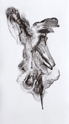 """""""Swag-Tail"""" (Viscera 013) 2011 Ink and Graphite on Paper by Patti Jordan"""