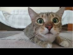 Funny Cats Compilation 2016 - Best Funny Cat Videos Ever - YouTube