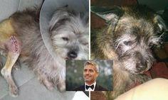 George Clooney adopta perro refugio Ohio