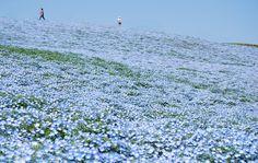 Áo là quốc gia nổi tiếng với những phong cảnh thiên nhiên hoang dại, những hồ nước trong xanh