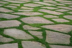 I Have Wanted to Do This for YEARS and Plant Stepables® (an awesome line of plants that are tough little perennials and handle foot traffic well) Between the natural flagstones!